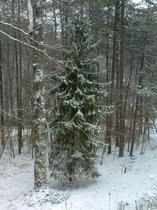 Snow on trees in front yard